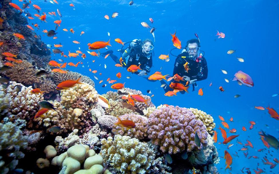 Lặn ngắm san hô là điều ngóng chờ nhất của tất cả du khách